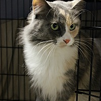 Adopt A Pet :: Bella - New Richmond,, WI