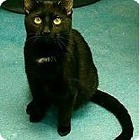 Adopt A Pet :: Blake - Pompton Plains, NJ