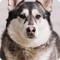 Adopt A Pet :: Misti - Portland, OR