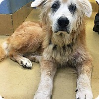 Adopt A Pet :: Gideon - BIRMINGHAM, AL