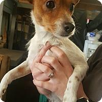 Adopt A Pet :: Peaches - Odessa, TX