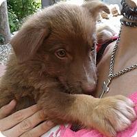 Adopt A Pet :: JoJo (adopted) - Burlington, VT