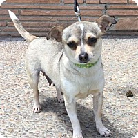 Adopt A Pet :: Penny - Santa Cruz, CA