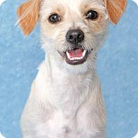 Adopt A Pet :: Tucker - Encinitas, CA
