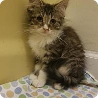 Adopt A Pet :: Diamond - Braidwood, IL