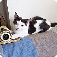 Adopt A Pet :: Lindy - Vancouver, BC