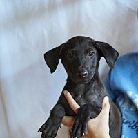 Adopt A Pet :: Zinger - Oviedo, FL