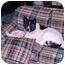 Photo 2 - Akita Dog for adoption in Chicago, Illinois - Blaze