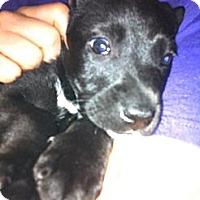 Adopt A Pet :: Cry Baby - Donaldsonville, LA