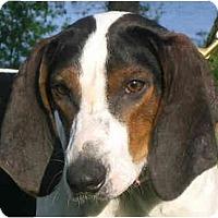 Adopt A Pet :: Alex - Jacksonville, FL