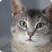 Adopt A Pet :: Mimi Toutou - Chicago, IL