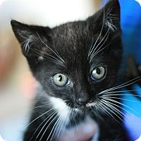 Adopt A Pet :: Veronica - Canoga Park, CA