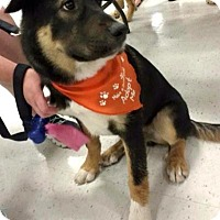 Adopt A Pet :: Shadow - West Richland, WA