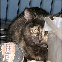 Adopt A Pet :: LV-Jenny - Tyler, TX