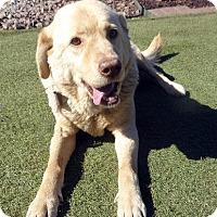 Adopt A Pet :: Braedan - Fairfax, VA