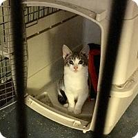 Adopt A Pet :: Buppy - Cranford/Rartian, NJ