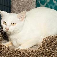 Adopt A Pet :: Duchess - Santa Fe, TX