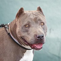 Adopt A Pet :: BIRDIE - Pasadena, CA