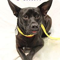 Adopt A Pet :: Milan - Bradenton, FL