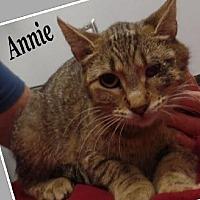 Adopt A Pet :: Annie - Huntley, IL
