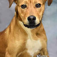 Adopt A Pet :: Chance - Newnan City, GA