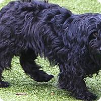 Adopt A Pet :: Sally Ann - Woonsocket, RI