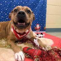 Mixed Breed (Large) Mix Dog for adoption in Kalamazoo, Michigan - Sasha JC