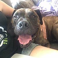 Adopt A Pet :: Harley - Lompoc, CA