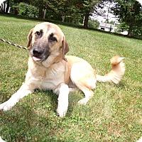 Adopt A Pet :: SocKs - LAKEVILLE, MA