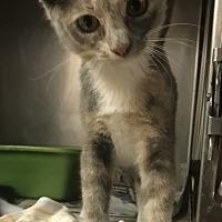 Adopt A Pet :: Blue - Newport, NC