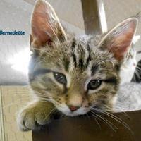 Adopt A Pet :: Bernadette - Oskaloosa, IA