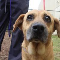 Adopt A Pet :: Mazie - Anderson, SC