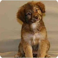 Adopt A Pet :: Prancer - Scottsdale, AZ