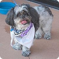Adopt A Pet :: Sparky - Minneola, FL