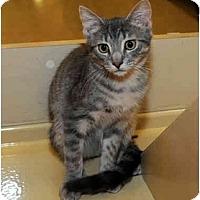 Adopt A Pet :: Dino - Farmingdale, NY