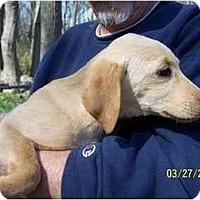 Adopt A Pet :: Hannah - York, SC