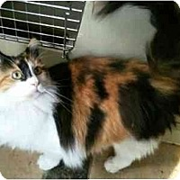 Adopt A Pet :: Natasha (PO) - Little Falls, NJ