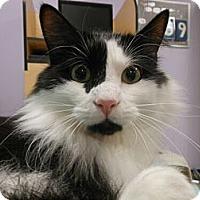 Adopt A Pet :: Harley - Reston, VA