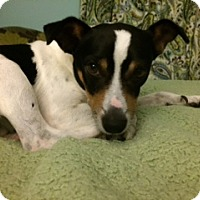 Adopt A Pet :: Devin - Hagerstown, MD