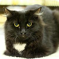 Adopt A Pet :: Luna - Sacramento, CA