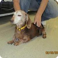 Adopt A Pet :: Pogo - Shawnee Mission, KS