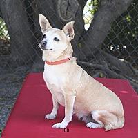 Adopt A Pet :: Holiday - Santa Barbara, CA