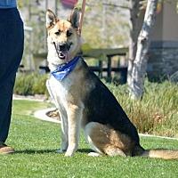 Adopt A Pet :: Storm - San Diego, CA