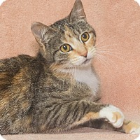 Adopt A Pet :: Lucia - Elmwood Park, NJ
