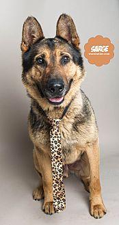 German Shepherd Dog Mix Dog for adoption in Wyandotte, Michigan - Sarge
