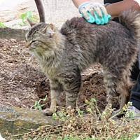 Adopt A Pet :: Odd Fellow - Monterey, VA