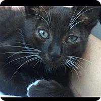 Adopt A Pet :: Bonus - Manhattan Beach, CA
