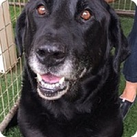 Adopt A Pet :: Col. Parker - Torrance, CA