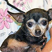 Adopt A Pet :: Starlet - Wildomar, CA
