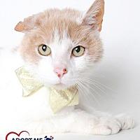 Adopt A Pet :: McMuffin - Alexandria, VA
